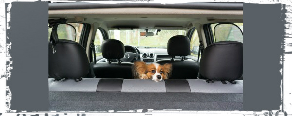 dogs relax during car rides