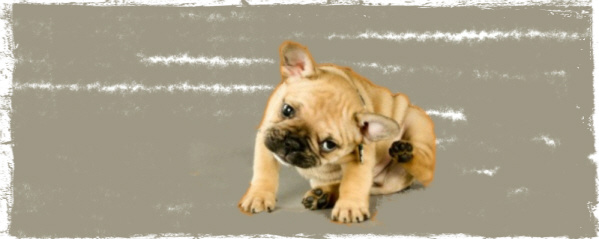 home cures for pet ailments