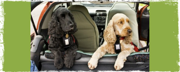 Seatbelts for pets have a 100 percent failure rate in crash tests