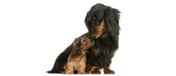 dog posts puppy