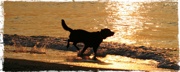 Top U.K. Travel Spots For Dogs
