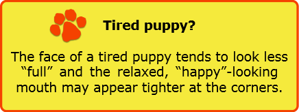 puppy exercise