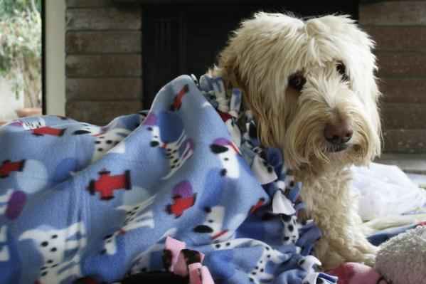 dog blanket for photos