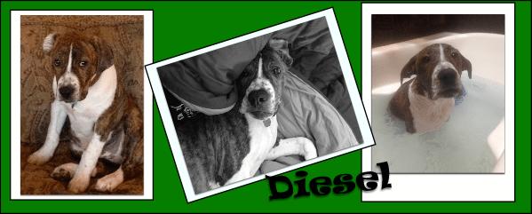 diesel the shelter dog book
