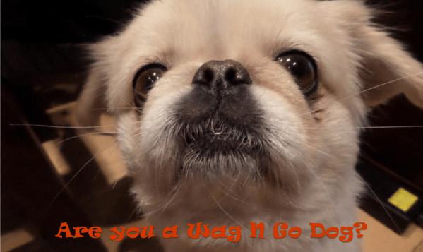tw wagngo dog