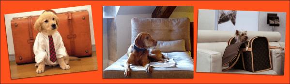 pet dogs travel arrangments