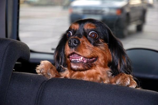 pet travel in car