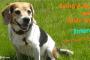 dedicated pet owner interview