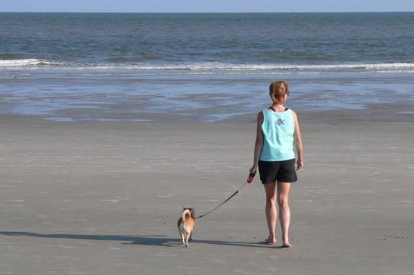 dog travel insurance