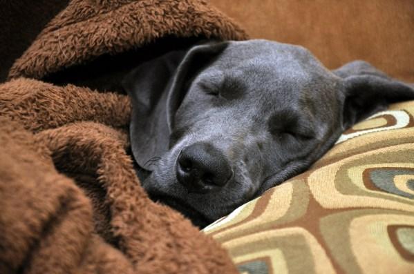dedicated pet blanket