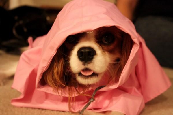 bring a doggie rain coat