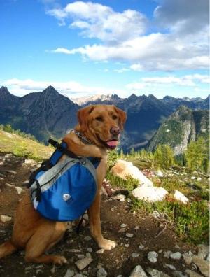 dog travel camping tips