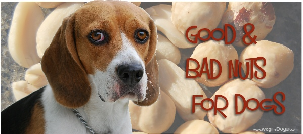 bad nuts for dogs