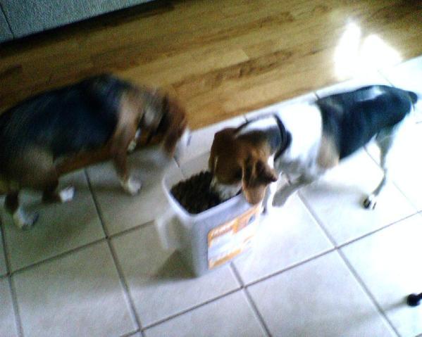 pack dog food in your dog bag