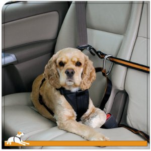 Doggy gadgets seatbelts