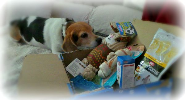 maggie checking out her pawsome box for review