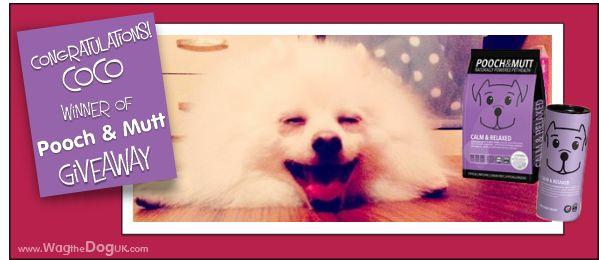 pooch and mutt dog food winner