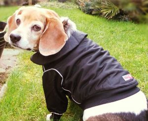 hoodless waterproof dog jacket