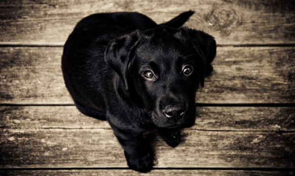 dog begging for bad human food
