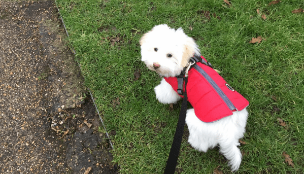 berry clever dog friendly office walks