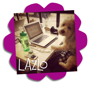 berry clever pets lazlo