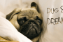 pug lover gift idea