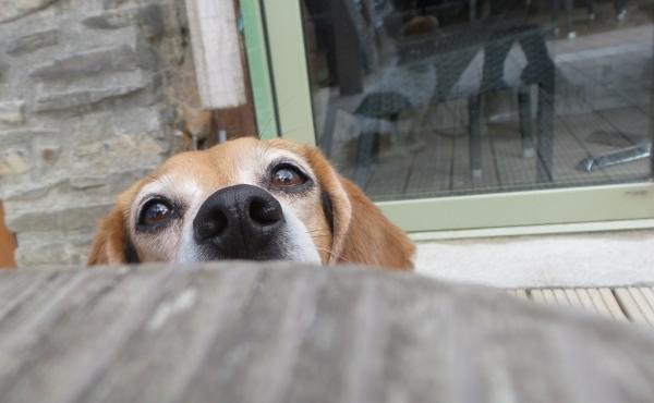 dog friendly watering hole cornwall