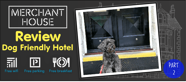 dog friendly hotel cornwall review