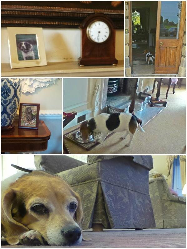 ston easton dog friendly details