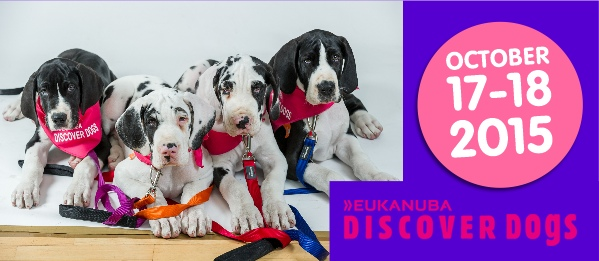 discover dogs 2015 cover
