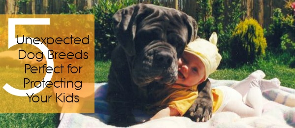 dog breeds cover