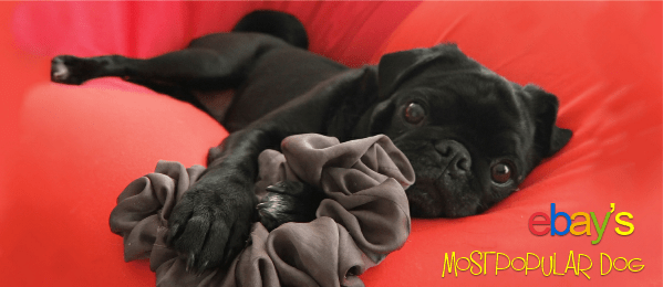 ebays most popular dog cover pugs
