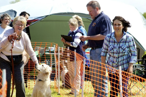 dog show events