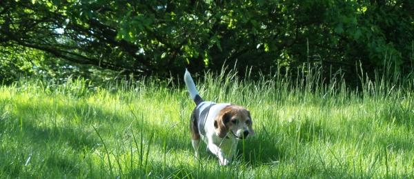 dog walks cover