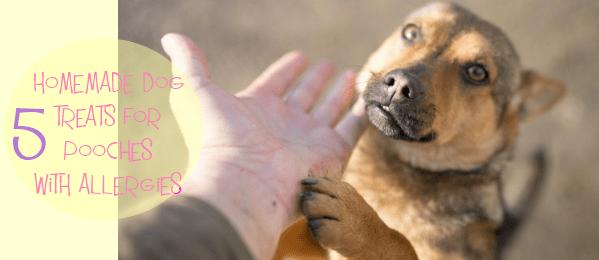 dog treats cover