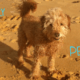 Pet Holiday Quiz