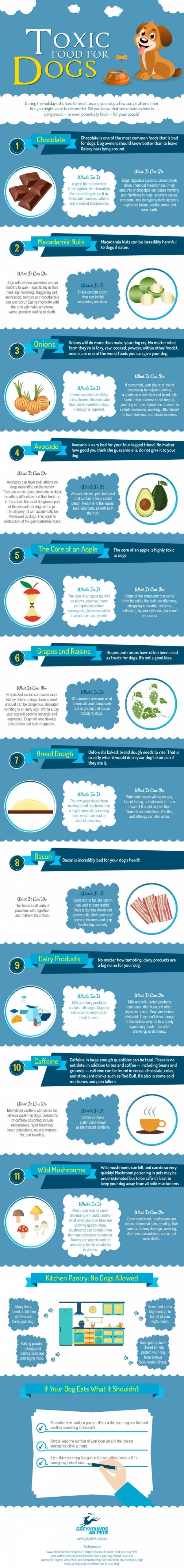 infographic toxic food for your dog