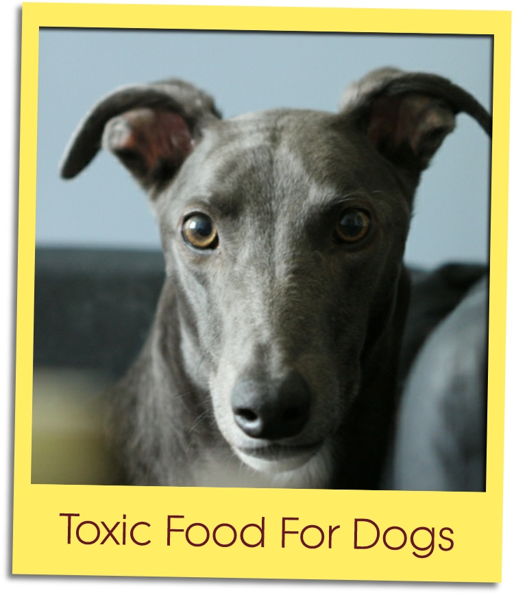 toxic food for dogs grid