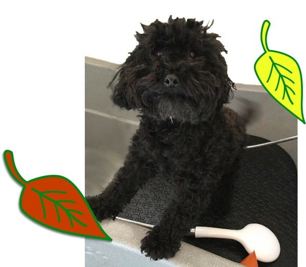 autumn dog essentials grooming