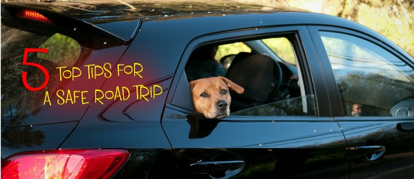 road trip with your dog cover