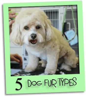 dog fur types grid