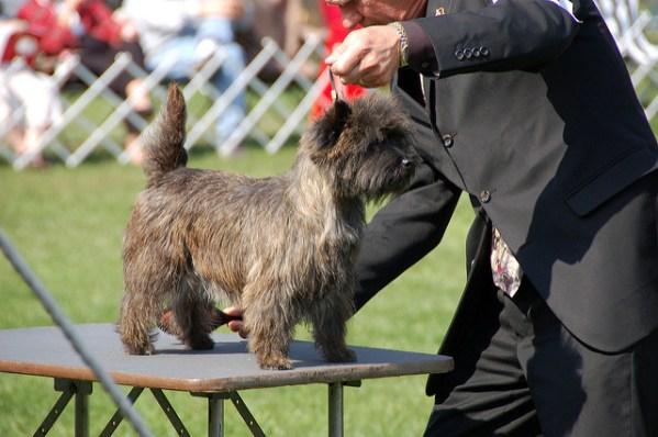 dog fur types wiry