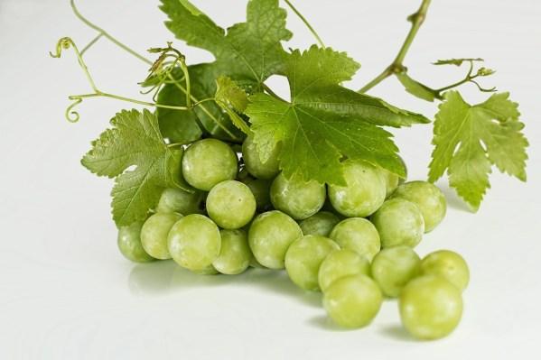 Most Toxic Dog grape