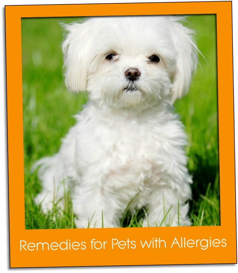 Remedies for Pets with Allergies grid