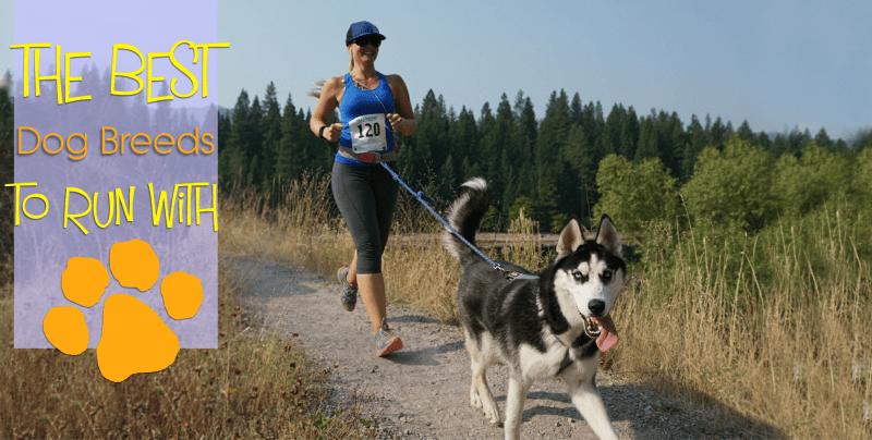 best dog breeds large