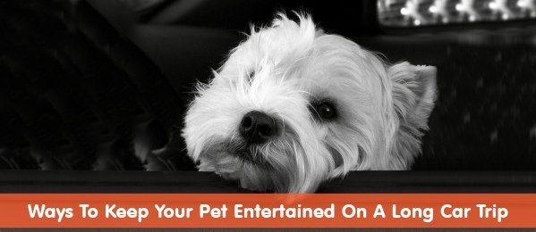 4 Ways To Keep Your Pet Entertained On A Long Car Trip