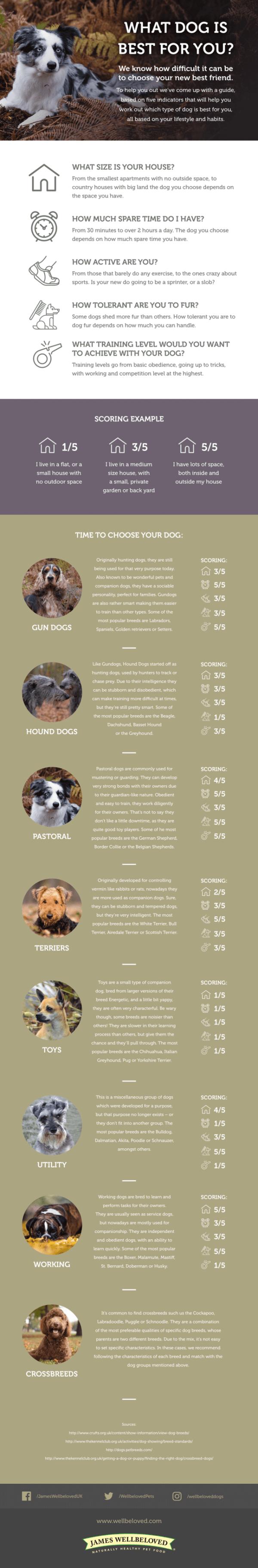 right dog info graph