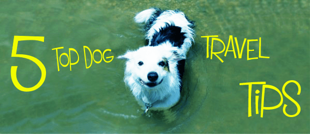 Travelling With Your Dog -5 Top Dog Travel Tips