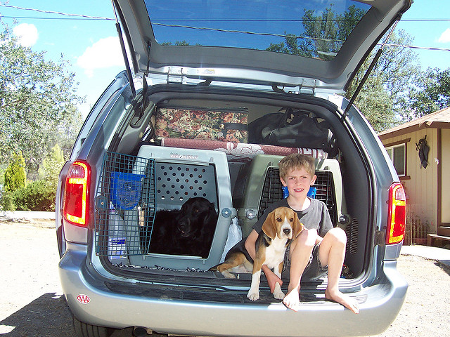 travelling with your dog safe