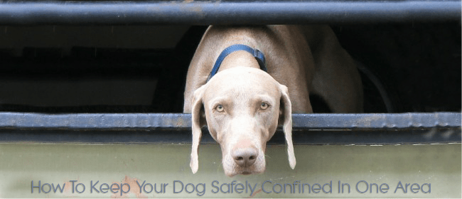 dog safely confined cover